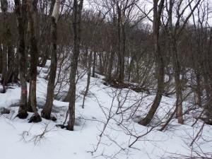 標高465m、積雪は1m以上ありそうです。