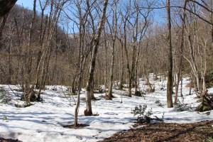 標高400m地点からは残雪あり