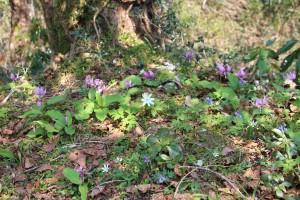登山道に溢れるほど咲く早春の花々