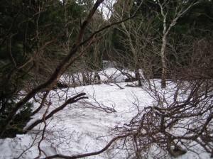 登山道の残雪は多いため、入山はお控えください。