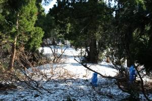 遊歩道出口、奥が金剛・雪畑・ドンデンへの縦走路です。