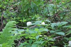 森の中でひっそりと咲く