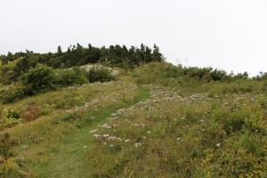登山道はお花畑のようです。