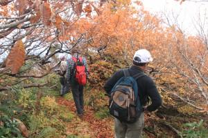 これより登山道、紅葉は見ごろです。