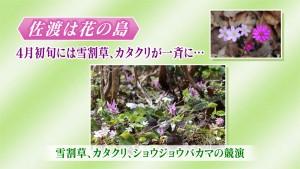 12 花の島