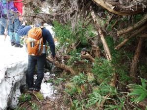 従走路の倒木処理