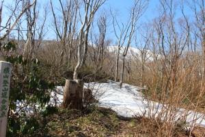 横山登山道合流点、残雪は多くなります。