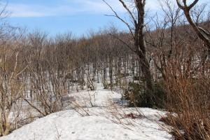 横山登山道合流点から横山登山口方向を見る。