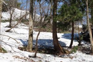 この先アオネバ十字路、雪解けはもうすぐです。