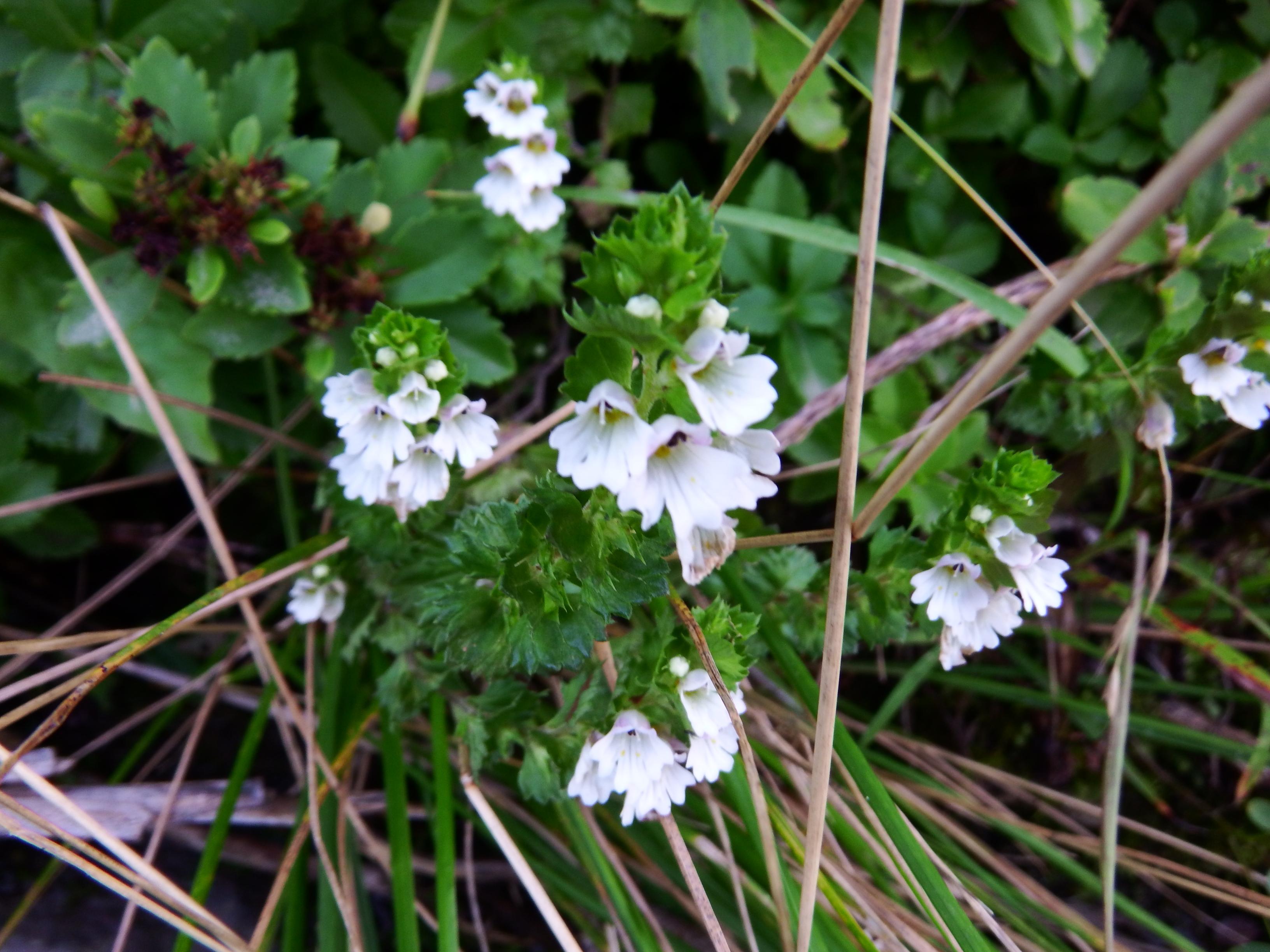 ブログ(佐渡島の山と花の状況)